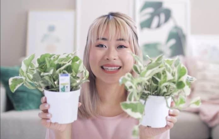 растение и настроение
